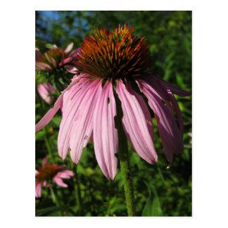 Flor erguida del cono postal