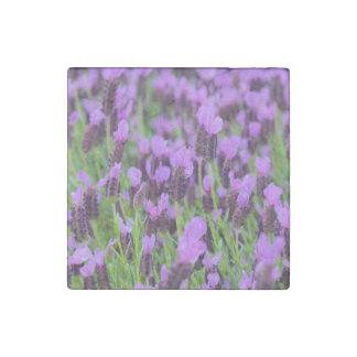 Flor española púrpura de la lavanda imán de piedra