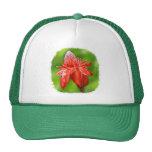 Flor exótica color de rosa del Caribe roja Gorras