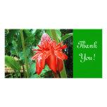 Flor exótica color de rosa del Caribe roja Tarjeta Fotografica Personalizada