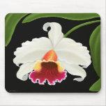 Flor exótica de la orquídea de Cattleya Alfombrillas De Ratón