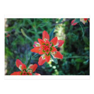Flor exótica postales
