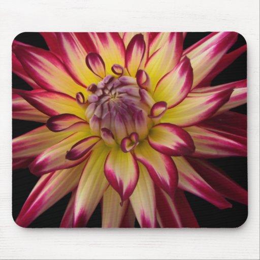 Flor exótica tapetes de raton
