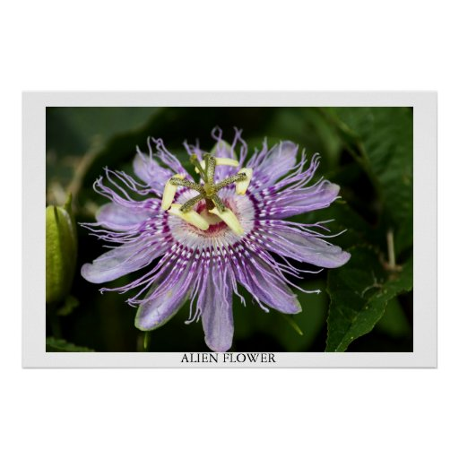 Flor extranjera impresiones