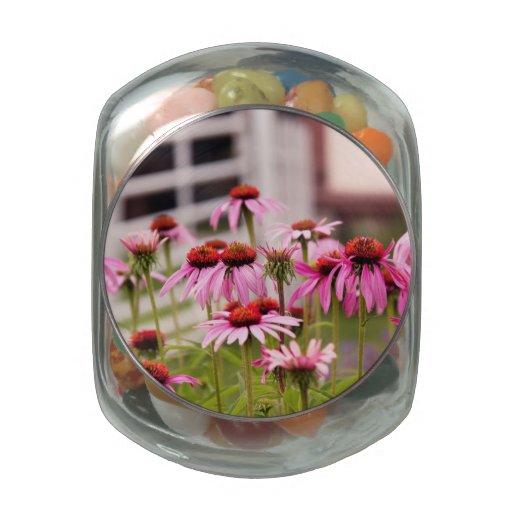 Flor - flor del cono - en un jardín inglés jarras de cristal