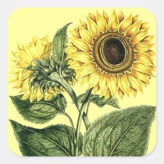 Flor floral botánica del girasol de la herencia de