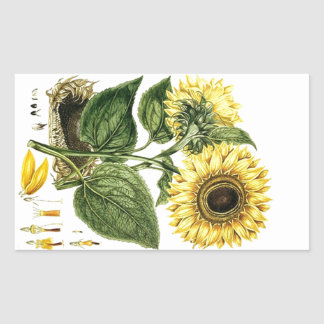 Flor floral botánica del girasol de la herencia pegatina rectangular
