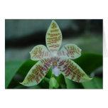Flor floreciente de la orquídea del hierogliphica tarjetas