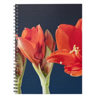 Flor floreciente del Amaryllis Libreta