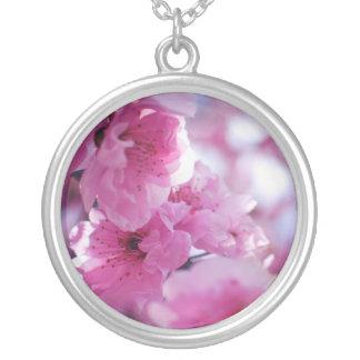 Flor floreciente del árbol de ciruelo colgante redondo