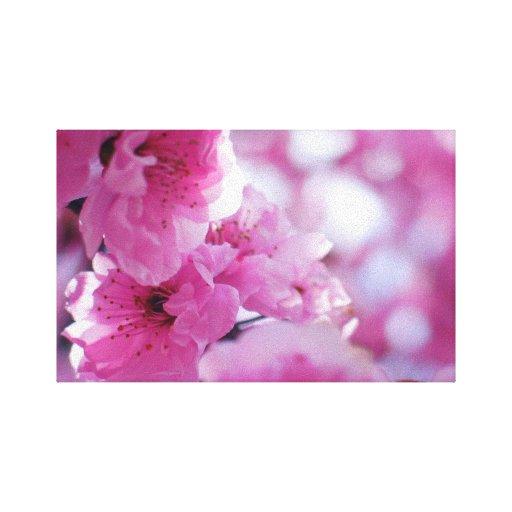 Flor floreciente del árbol de ciruelo impresion de lienzo