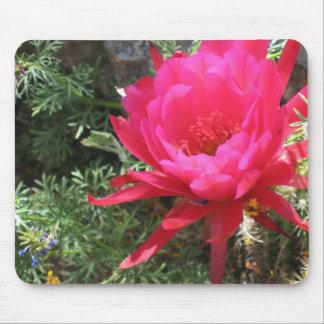 Flor floreciente del cactus de las rosas fuertes tapete de ratón