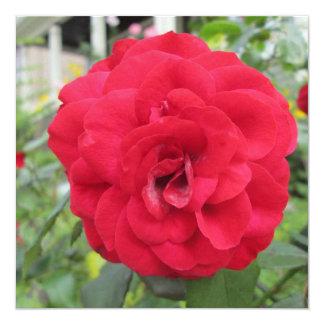 """Flor floreciente del rosa rojo invitación 5.25"""" x 5.25"""""""