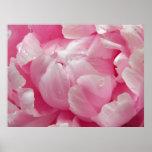 Flor floreciente romántica rosada del peony con poster