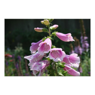 Flor Impresiones Fotográficas