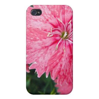 Flor frecuencia intermedia 212 iPhone 4 protectores