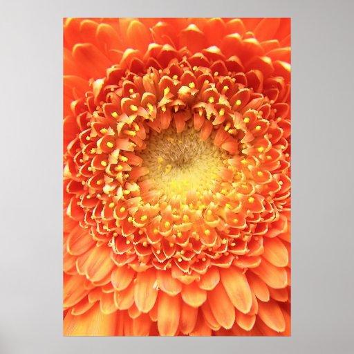 Flor frecuencia intermedia 222 póster