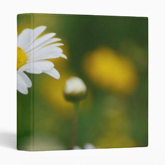 Flor frecuencia intermedia 43