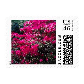 Flor frecuencia intermedia 62