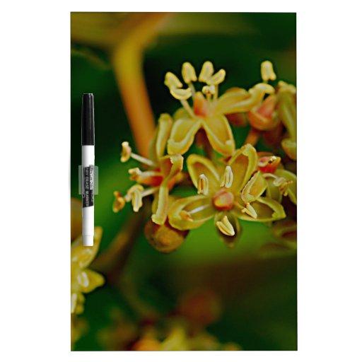 Flor frecuencia intermedia 632 pizarra blanca