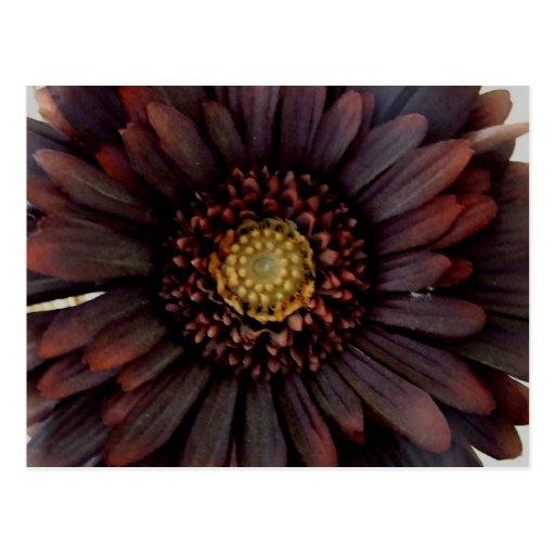 Flor frecuencia intermedia postal