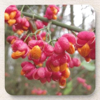 Flor/fruta hermosos del eje posavaso