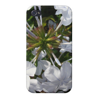 Flor iPhone 4 Cobertura