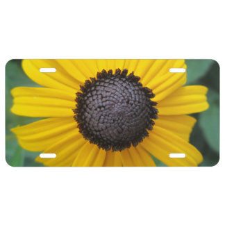 Flor Gloriosa del jardín de la margarita Placa De Matrícula