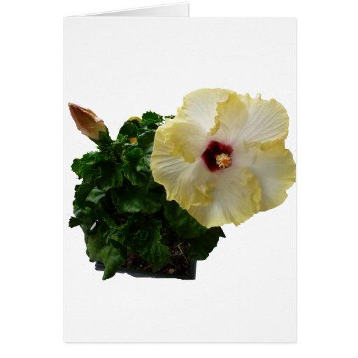Flor grande del hibisco con follaje felicitacion