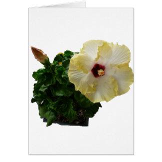 Flor grande del hibisco con follaje felicitaciones