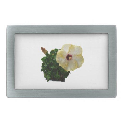 Flor grande del hibisco con follaje hebilla cinturón rectangular