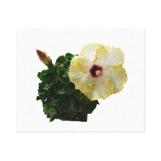 Flor grande del hibisco con follaje impresiones en lona