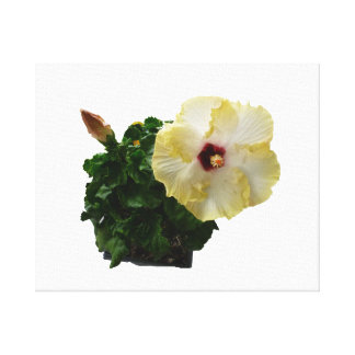 Flor grande del hibisco con follaje lienzo envuelto para galerías