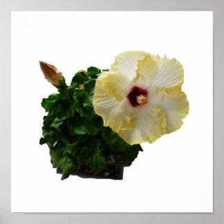 Flor grande del hibisco con follaje impresiones