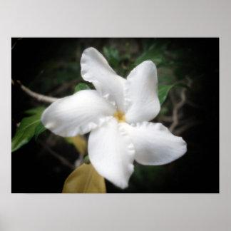 Flor hawaiana 2 póster