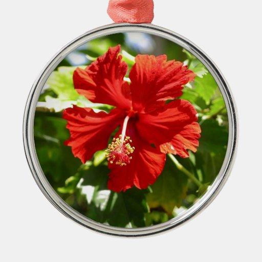 Flor hawaiana roja del hibisco adorno navideño redondo de metal