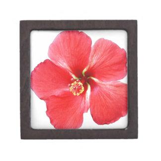 Flor hawaiana roja del hibisco caja de recuerdo de calidad