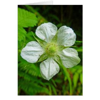 Flor hawaiano de la frambuesa tarjeta de felicitación
