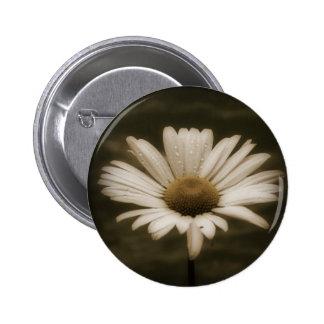 Flor hermosa de la margarita pin