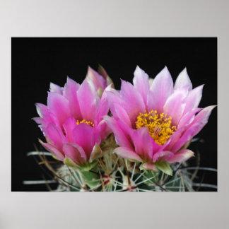 Flor hermosa del cactus póster