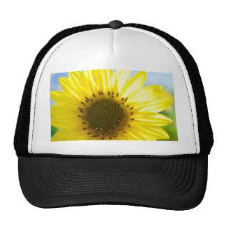Flor hermosa en el Sun Gorra