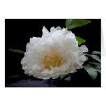 Flor hermoso del Peony Felicitaciones