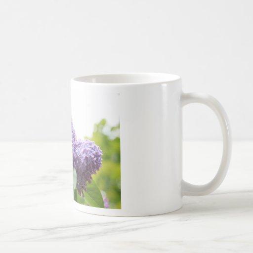 Flor hermoso, suave de la lila taza clásica