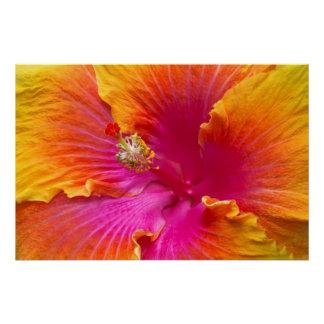 Flor - hibisco chino - aprecio
