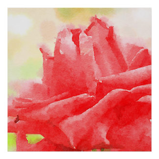 Flor híbrida roja hermosa del rosa de té de la póster