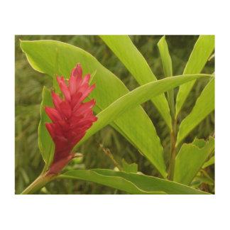 Flor I del jengibre rojo Cuadros De Madera
