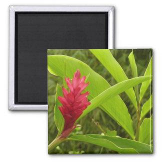 Flor I del jengibre rojo Imán Cuadrado