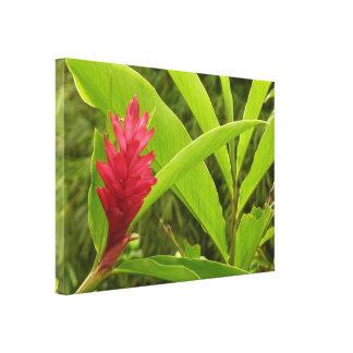 Flor I del jengibre rojo Impresiones De Lienzo