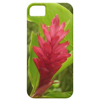 Flor I del jengibre rojo iPhone 5 Funda