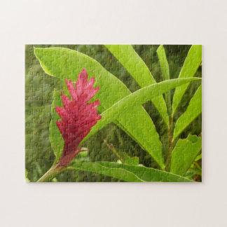 Flor I del jengibre rojo Rompecabezas Con Fotos